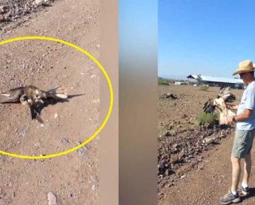 VIDEO: Fight of Snake vs. Hawk has Surprising Results