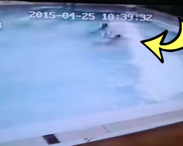 WATCH: This is What Happens to a Swimming Pool in a Strong Earthquake