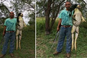The Truth about the Monstrous Bullfrog Caught in Texas that Frightened People