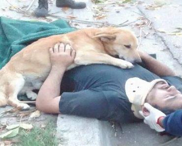 Loyal Dog Hugs Master Who Fell from Tree
