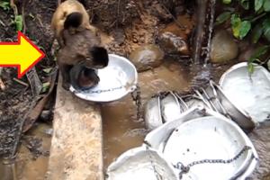 Video of Monkey Washing Basins at the River Goes Viral