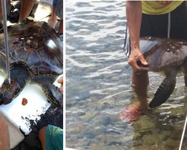 Russian National Faces Charges for Allegedly Killing Endangered Turtle