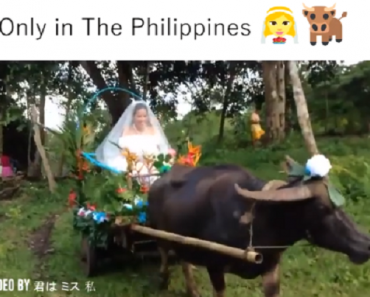 Bride in the Philippines Goes Viral for Her Carabao-Drawn Wedding Carriage