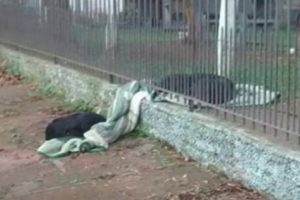 Puppy Shares Blanket with Stray Dog