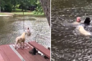 WATCH: Man 'Saved' by Two Dogs Who Thought He was Drowning