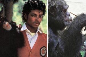 Paintings by Michael Jackson's Old Chimp Quickly Get Sold in Art Exhibit
