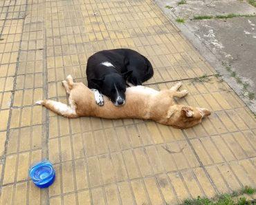 Loyal Dog Keeps Vigil Beside Best Friend Hit and Killed by a Car