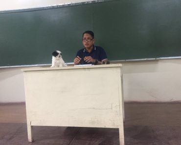 This Professor Brings His Cute Dogs to School