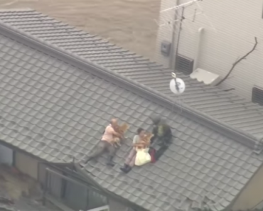 Dramatic Video Shows Rescue of Japanese Couple Who Refused to Leave Pets Behind