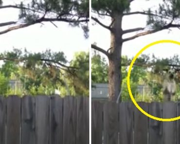 Man Records Hilarious Sight after Neighbor's Dog Discovers the Trampoline