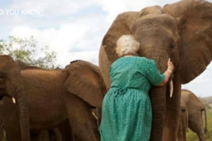 This Kind Woman Becomes 'Mother' for Orphan Elephants