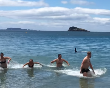 Baby Orca Swims Close to Shore, Sneaks Up to Some Swimmers