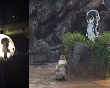 Penguin Falls in Love with Cardboard Cutout, Dies with Anime GF by His Side