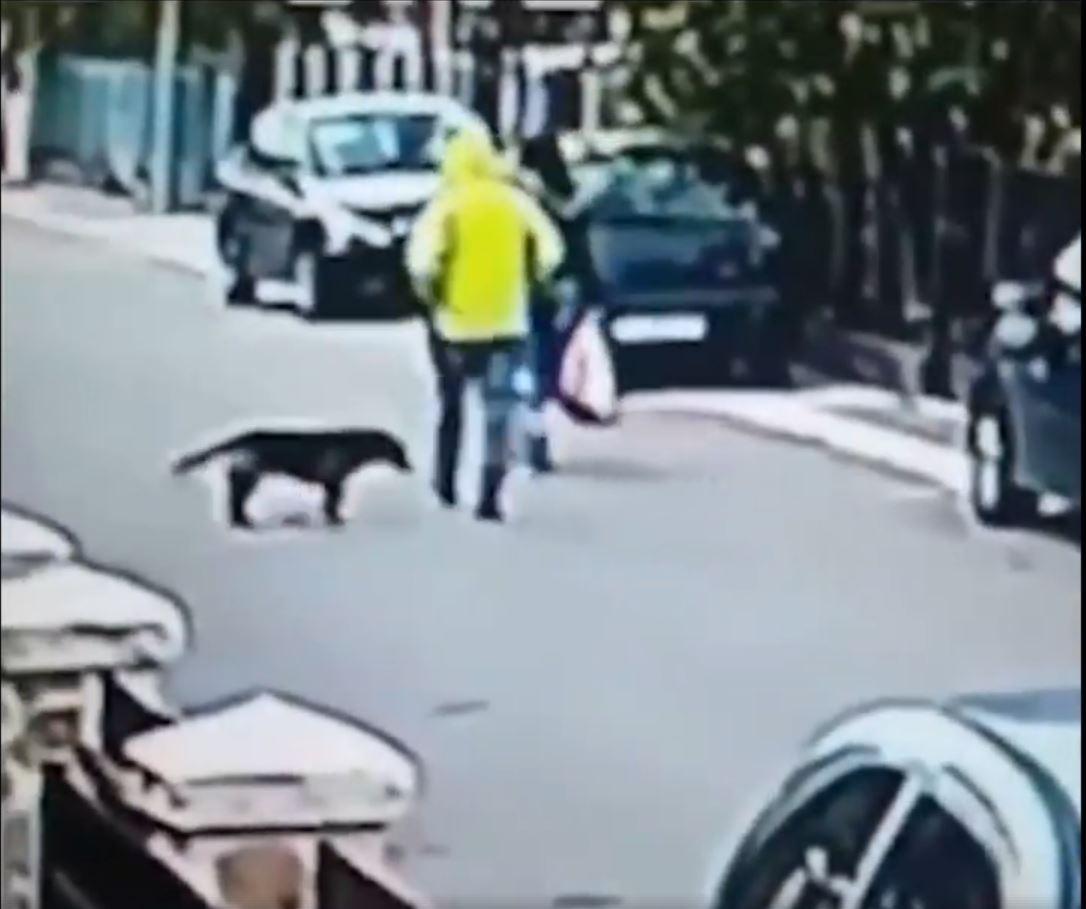 Dog Hero 2