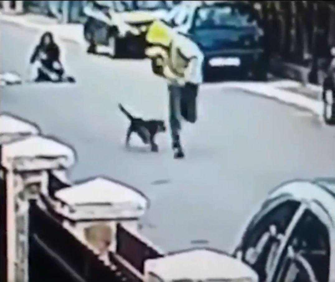 Dog Hero 4