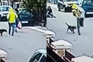 Homeless Dog Sends An Attacker Running When He Tried To Attack A Woman