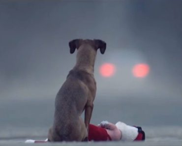 Heartbreaking Film Shows Girl Abandoned in Forest, Turns Out to be a Dog