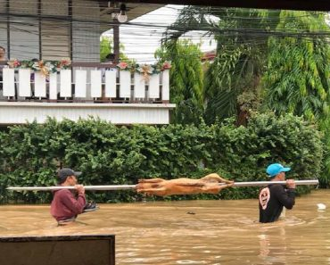 Photo of Lechon Being Delivered Amid PH Floods Goes Viral