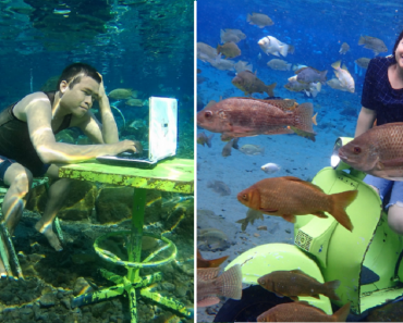 Unique Attraction Lets Tourists Take Spectacular Underwater Photos