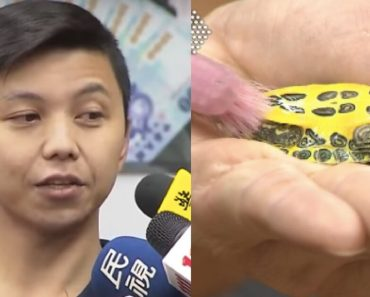 Man From Taiwan Earns $2700 A Month Just For Cleaning A House And Brushing A Turtle