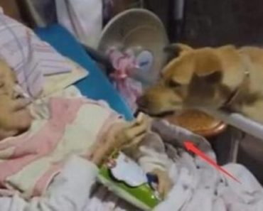 Abandoned by Her Children, Hospitalized Old Lady Only has Her Dog as Visitor