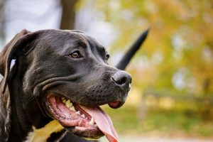 """US Attorney Gets Bashed for """"Do Not Adopt a Pit Bull"""" Ad"""