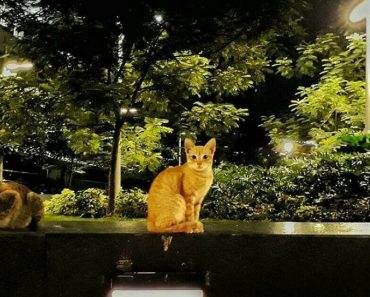 Public Outrage Has Risen After BGC Cats Went Missing And Pest Control Company Is Seen Several Times Taking Them At Night