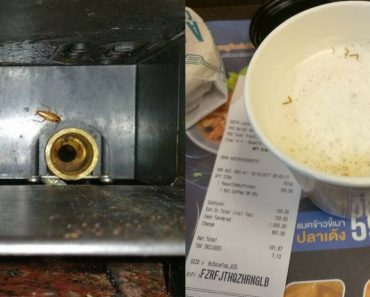 Coffee Companies Know That Cockroaches Live In Our Coffee Machines, But They Never Told Us