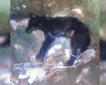30 Dogs Were Poisoned By Heartless Individuals In Penang