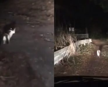 Cat Goes Viral for Leading Lost Humans Out of Forest in Japan