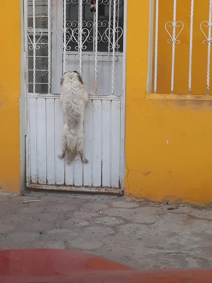 The little dog got stuck in the railings. [Image Credit: Edith Govea / Facebook]