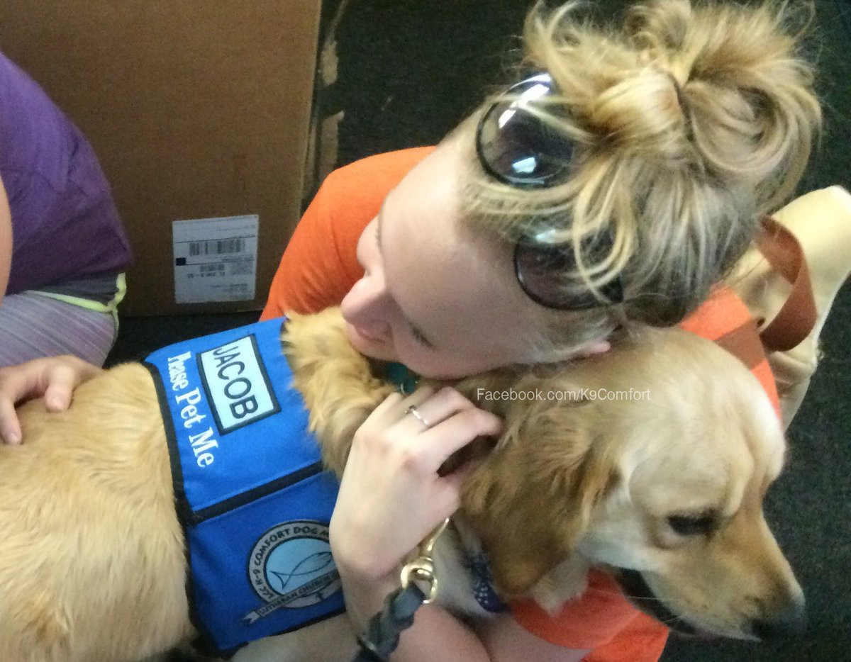 Jacob is one of the rescue dogs who helped the survivors of the recent mass shooting. [Image Credit: LCC K9 Comfort Dogs / Twitter]
