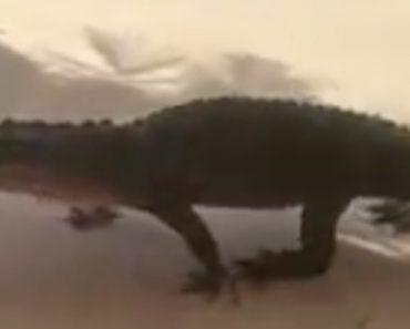 Alligator Enjoys Window-Shopping At A North Florida Strip Mall