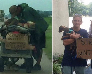 One Woman's Help Changes Life of Homeless Old Man with 10 Stray Dogs