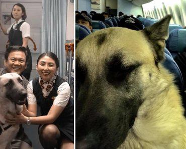 Netizen Praises PAL for Letting Him Bring Emotional Support Dog in Flight
