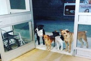 Dogs Patiently Wait for Homeless Man Admitted at Hospital