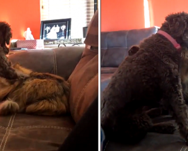 Dog Pets the Cat, Cat Hugs Dog Back in Adorable Video