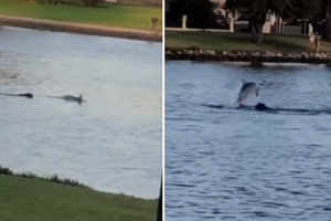 Video of Dog and Dolphin Swimming Together in River Wows Netizens