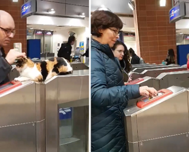 Adorable Street Cat Goes Viral as She Greets Commuters at Train Station in Israel