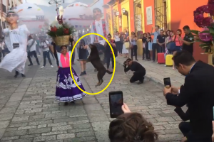 Adorable Dog Joins the Street Dancing after Seeing People Having Fun in Parade