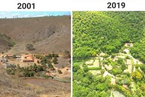 Couple Plants 2.7 Million Trees in 20 Years to Restore a Forest, Earns Praise
