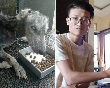 Guy Finds Skin-and-Bones Husky, Transforms Dog after Just 10 Months
