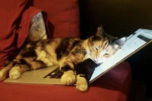 Cat Walks on Laptop and Accidentally Presses 'SUBMIT' Button, Wins Owner Something Special