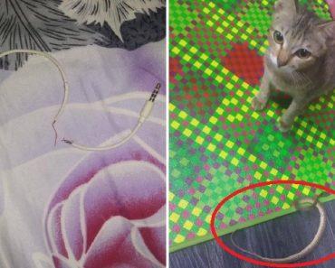 Adorable Cat Bites Owner's Earphones, Brings Back Snake as 'Peace Offering'