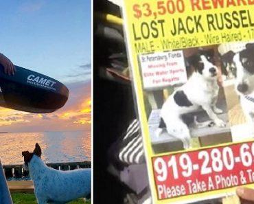 Stolen Dog Leaps Out of Car Window after Man Calls Its Name, Finder Receives $3,500 Reward