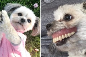 Man Puts Dentures Away to Sleep, Finds Dog with 'Brand-New Smile' after Waking Up
