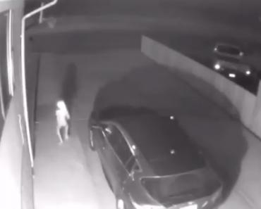 Elf-Like 'Alien' Appears in Woman's Car Port, Video Goes Viral