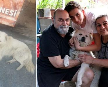 Family Loses Dog at Home, Finds it Living in the Streets Some 60 Miles Away