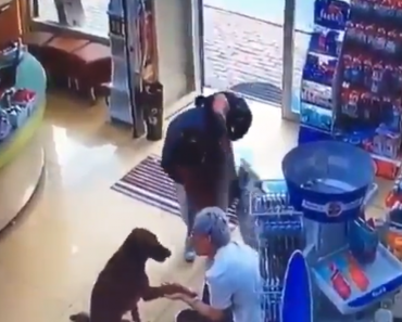 Injured Dog in Istanbul Knew Exactly Where to Find Help, Finds Treatment in Pharmacy