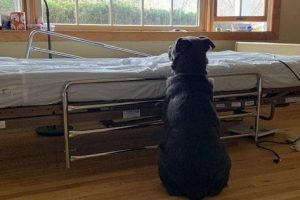 Dog's Heartbreaking Photo at Owner's Empty Hospital Bed Leads to Adoption